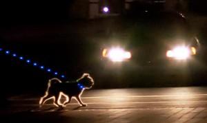 hond uitlaten donker