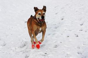snowboots hond sneeuw